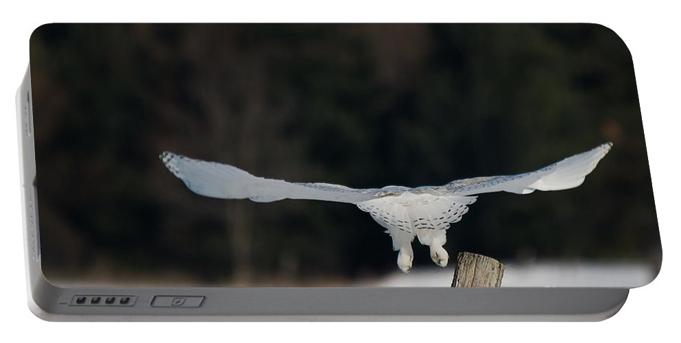 Snowy Owl Portable Battery Charger featuring the photograph Gliding Snowy by Cheryl Baxter