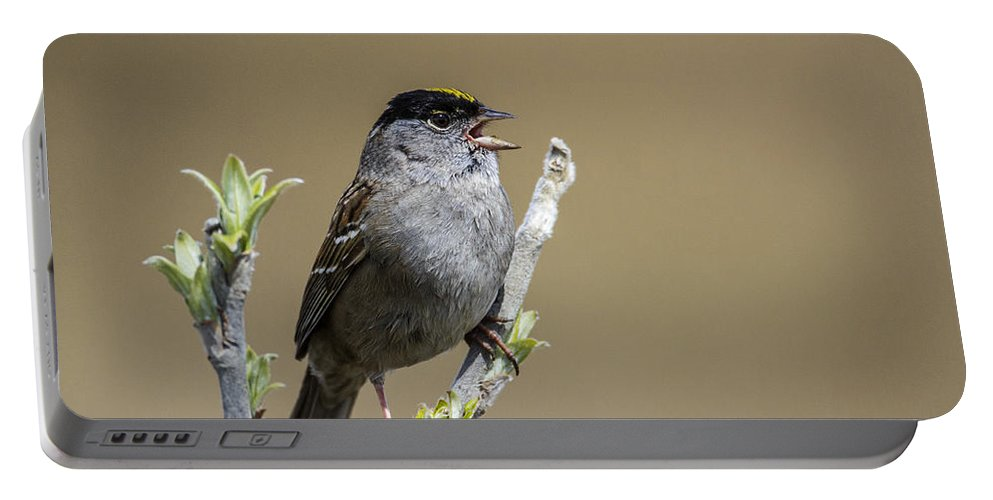 Doug Lloyd Portable Battery Charger featuring the photograph Goldencrowned Sparrow by Doug Lloyd