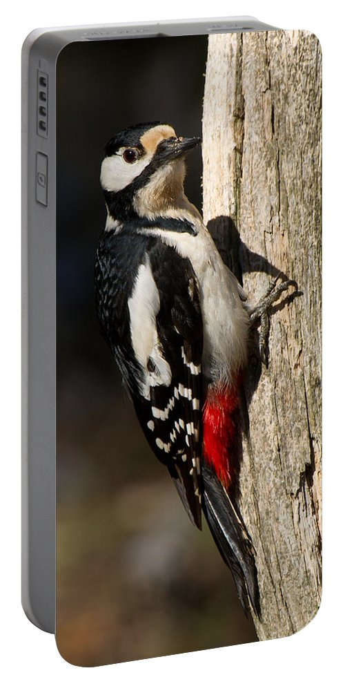 Great Spotted Woodpecker Portable Battery Charger featuring the photograph Great Spotted Woodpecker by Torbjorn Swenelius
