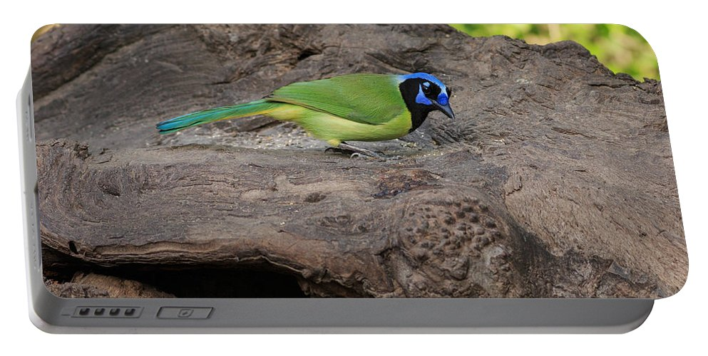 Green Jay Portable Battery Charger featuring the photograph Green Jay by Louise Heusinkveld