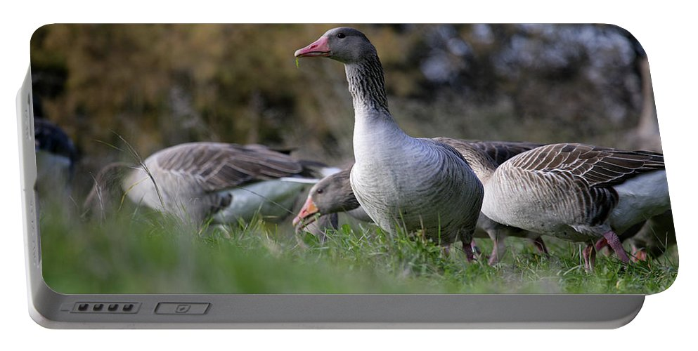 Outdoors Portable Battery Charger featuring the photograph Greylag Goose Anser Anser 1 by David Santiago Garcia