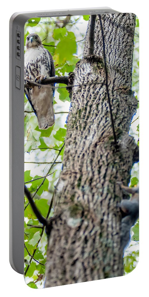 Hawk Portable Battery Charger featuring the photograph Hawk Hunting For A Squirrel On An Oak Tree by Alex Grichenko