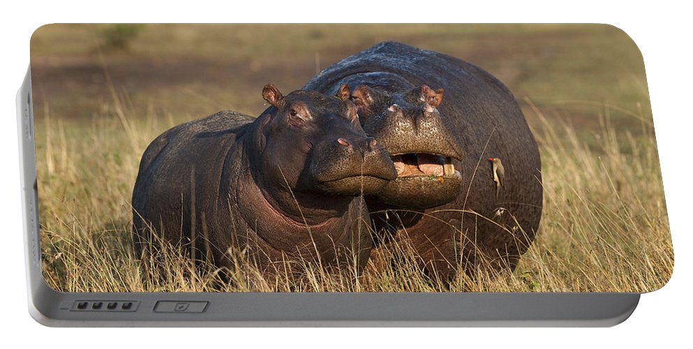 Africa Portable Battery Charger featuring the photograph Hippo Cow And Calf by John Shaw
