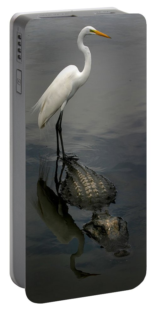 Alligator Portable Battery Charger featuring the photograph Hitch Hiker by Anthony Jones