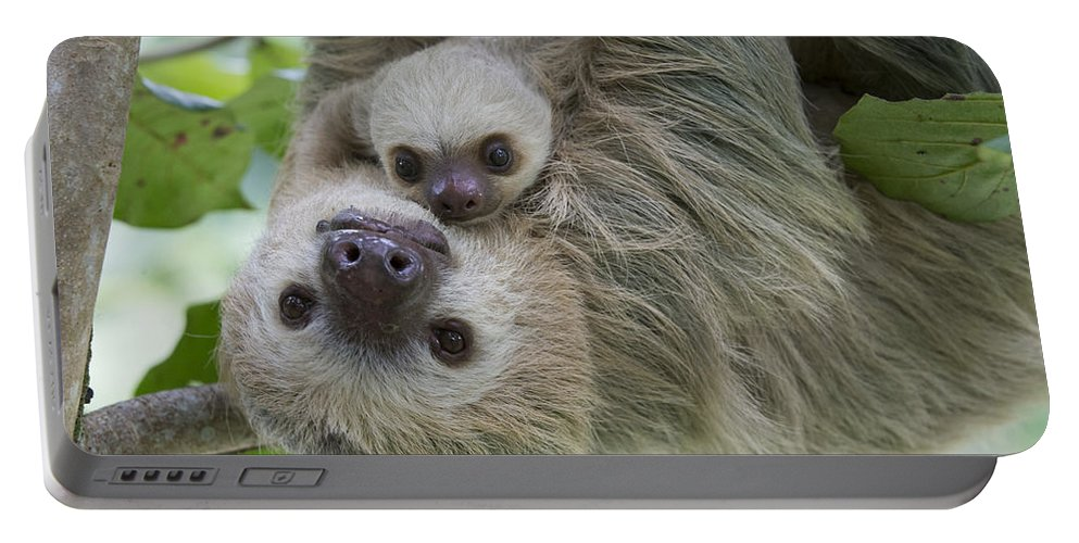 Suzi Eszterhas Portable Battery Charger featuring the photograph Hoffmanns Two-toed Sloth And Old Baby by Suzi Eszterhas