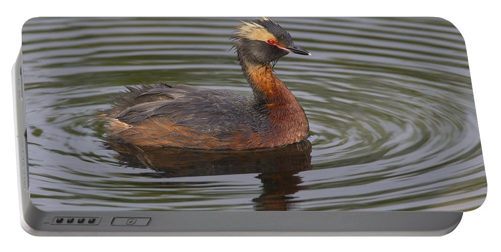 Doug Lloyd Portable Battery Charger featuring the photograph Horned Grebe by Doug Lloyd