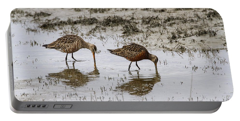 Doug Lloyd Portable Battery Charger featuring the photograph Hudsonian Godwit by Doug Lloyd
