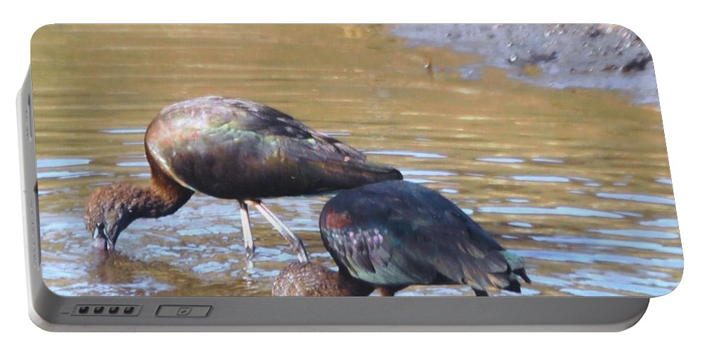N.ft.myers Portable Battery Charger featuring the photograph Ibis by Robert Floyd