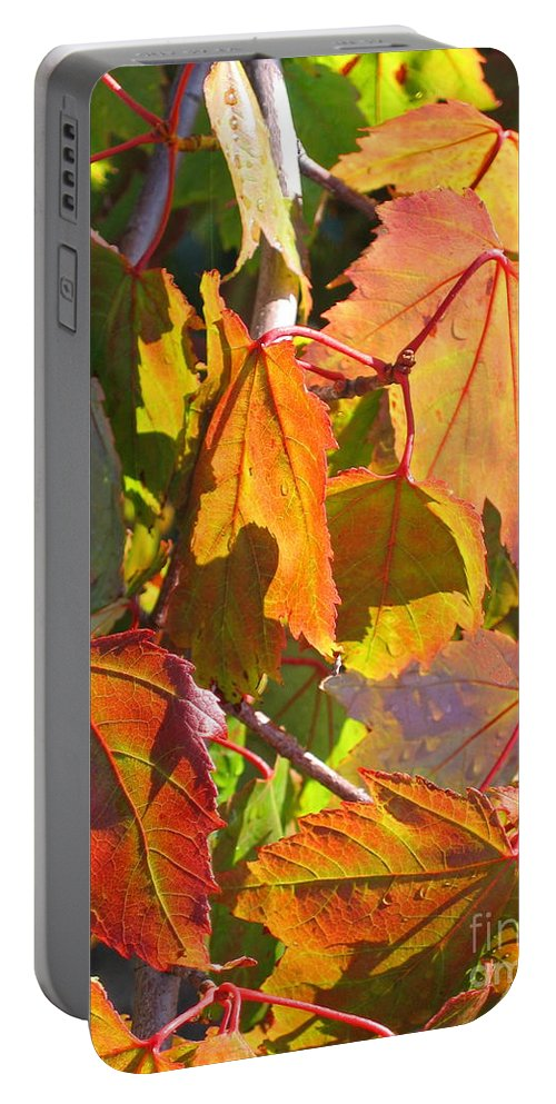 Autumn Portable Battery Charger featuring the photograph Illumining Autumn by Ann Horn