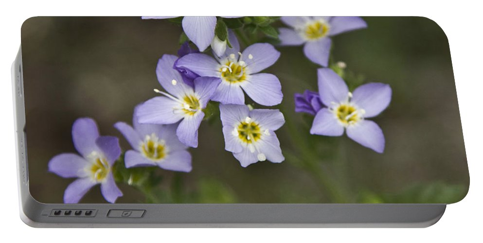Forget-me-not Portable Battery Charger featuring the photograph Jacob's Ladder by Dee Carpenter