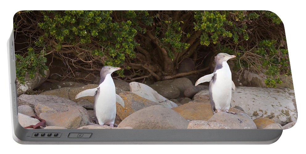 South Island Portable Battery Charger featuring the photograph Juvenile Nz Yellow-eyed Penguins Or Hoiho On Shore by Stephan Pietzko