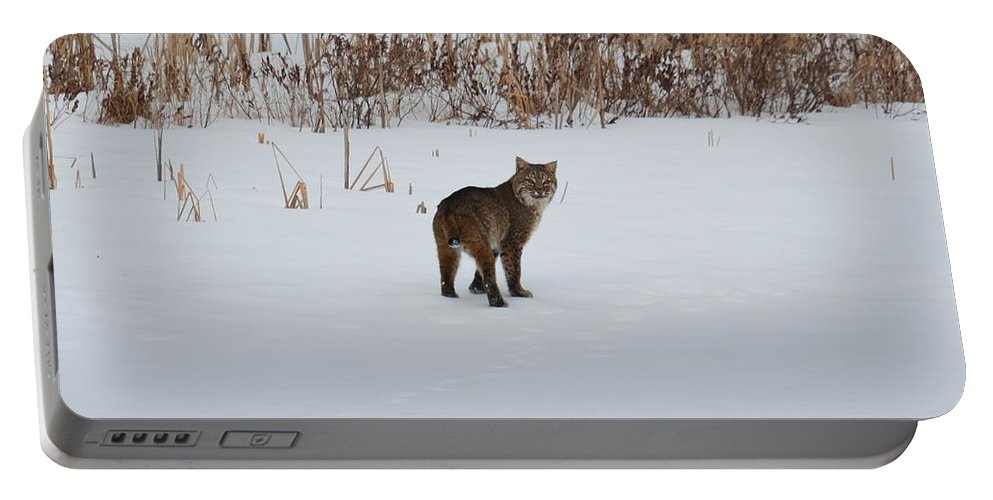 Bobcat Portable Battery Charger featuring the photograph Last Look by Thomas Phillips
