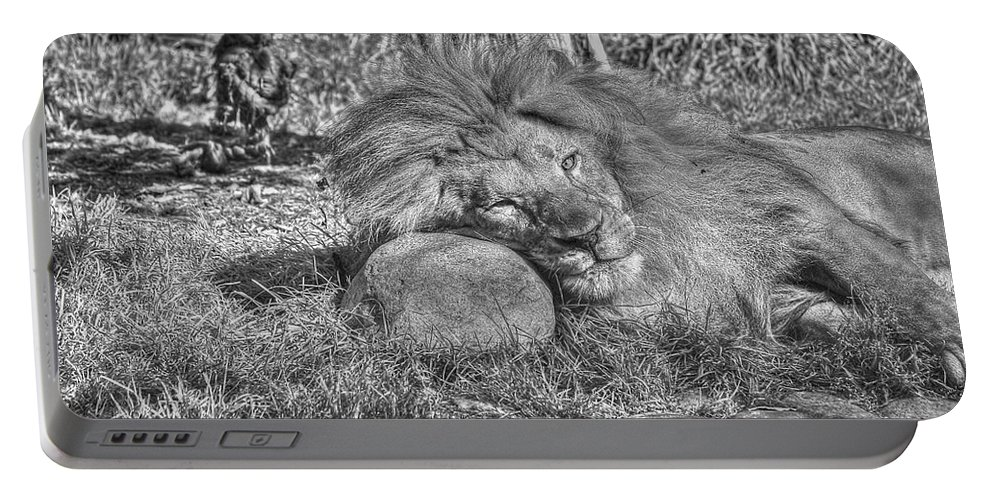 Animals Portable Battery Charger featuring the photograph Lion In Repose by SC Heffner