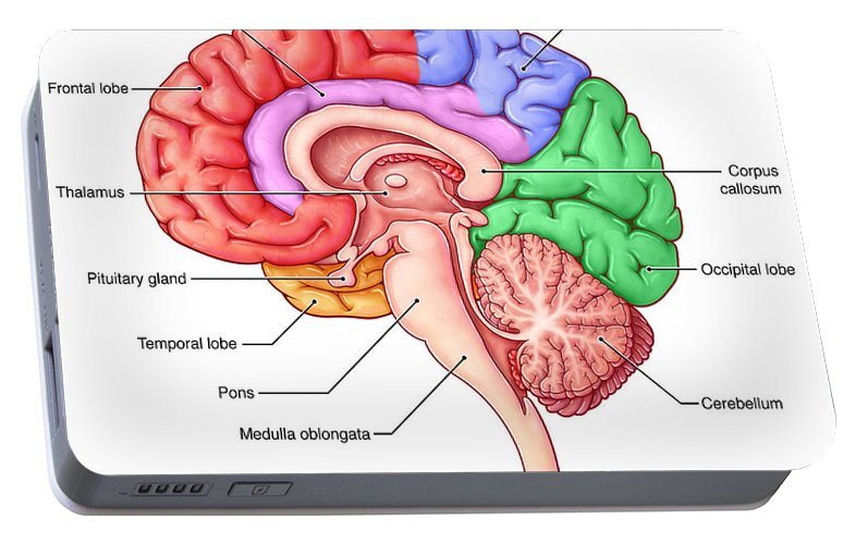 Lobes Of The Brain Sagittal View Portable Battery Charger For Sale