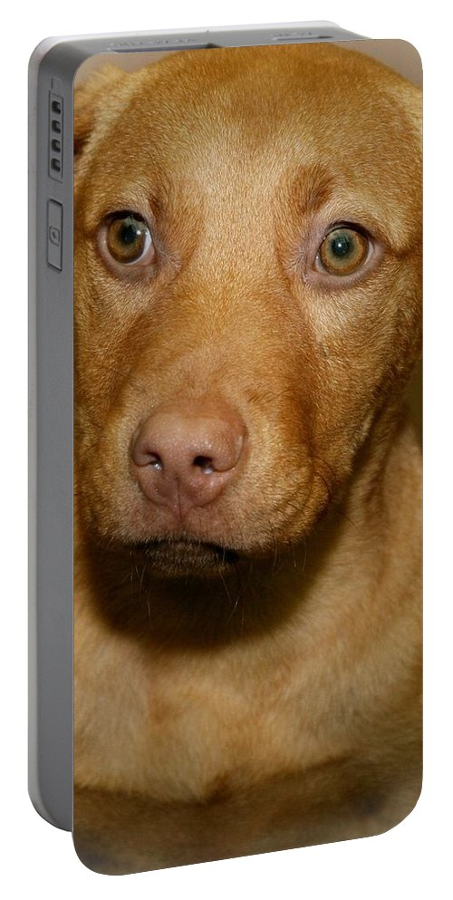 Puppy Portable Battery Charger featuring the photograph Lonely by Joyce Baldassarre