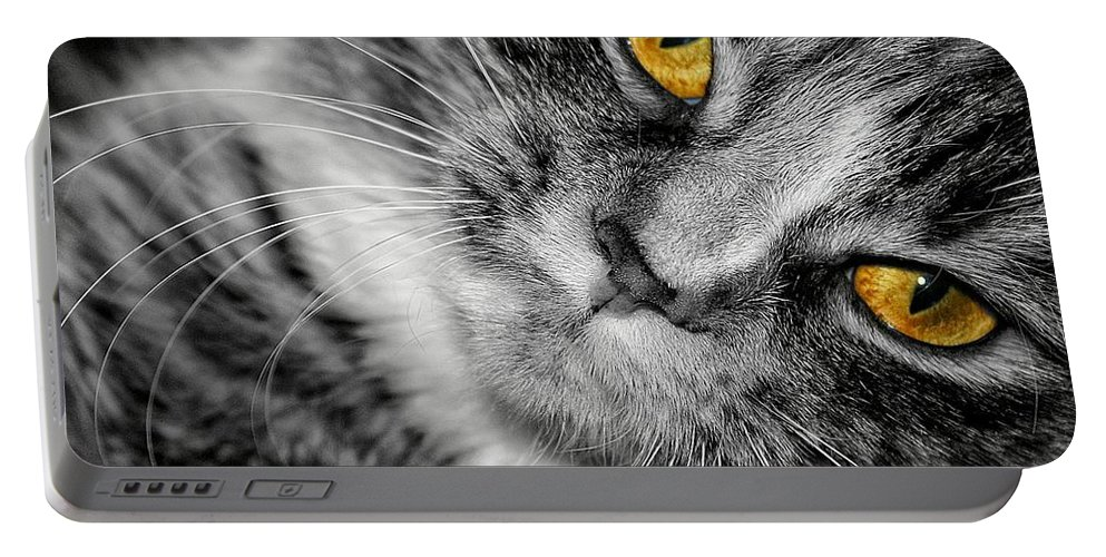 Cat Portable Battery Charger featuring the photograph Look Into My Eyes by Joyce Baldassarre