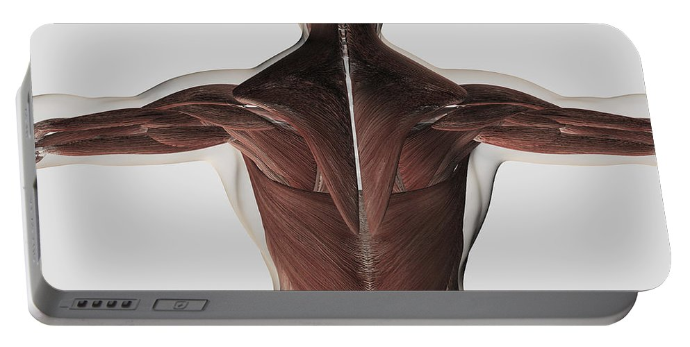 Square Image Portable Battery Charger featuring the digital art Male Muscle Anatomy Of The Human Back by Stocktrek Images