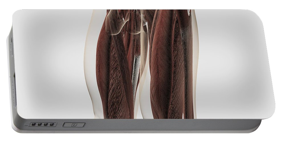 Square Image Portable Battery Charger featuring the digital art Male Muscle Anatomy Of The Human Legs by Stocktrek Images