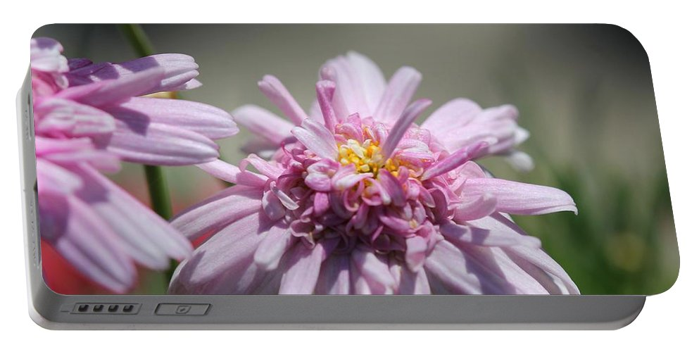 Mccombie Portable Battery Charger featuring the photograph Marguerite Daisy Named Double Pink by J McCombie