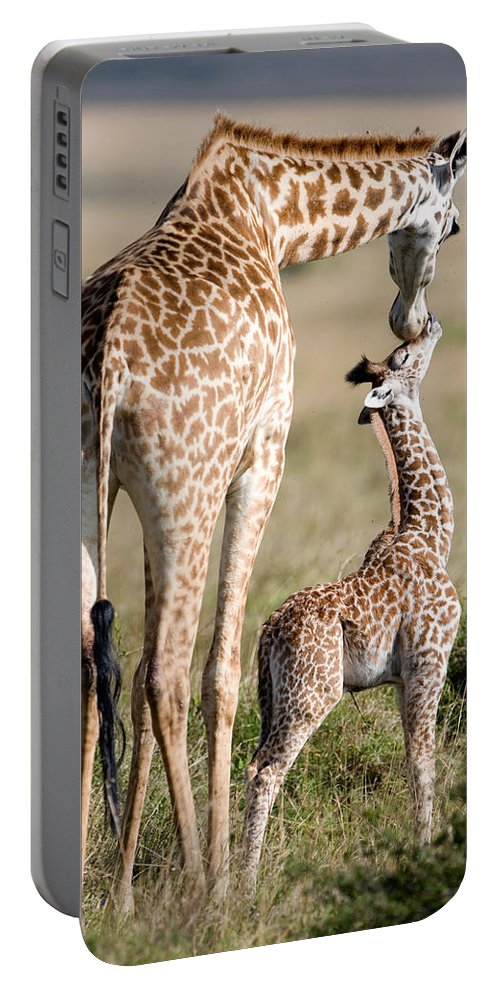 Photography Portable Battery Charger featuring the photograph Masai Giraffe Giraffa Camelopardalis by Panoramic Images