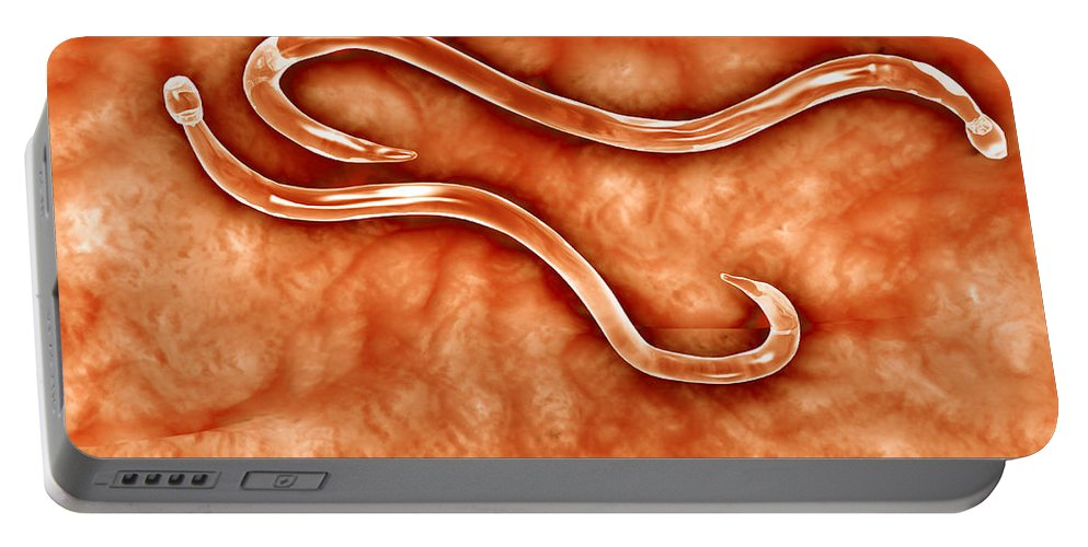 Pathology Portable Battery Charger featuring the digital art Microscopic View Of Hookworm by Stocktrek Images