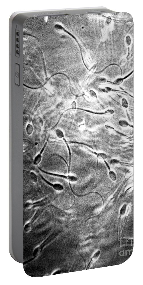 Micrograph Portable Battery Charger featuring the photograph Monkey Sperm by David M. Phillips