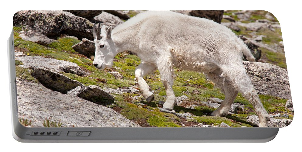 Arapaho National Forest Portable Battery Charger featuring the photograph Mountain Goat On Mount Evans by Fred Stearns