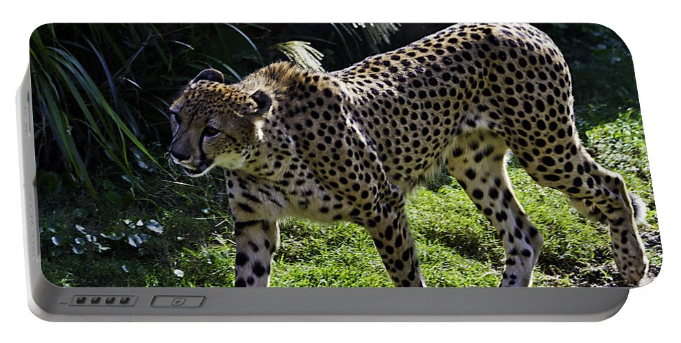 Tigers Portable Battery Charger featuring the photograph Moving On by Ken Frischkorn