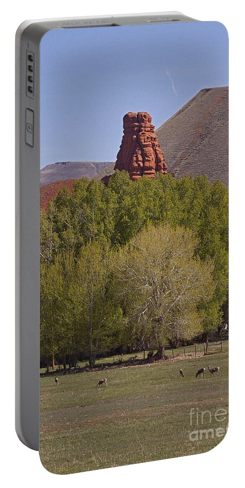 Odocoileus Hemionus Portable Battery Charger featuring the photograph Mule Deer  #2240 by J L Woody Wooden