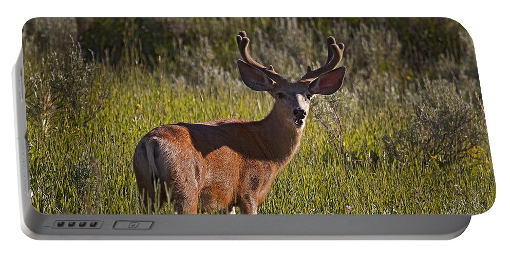 Deer Portable Battery Charger featuring the photograph Mule Deer Buck In Velvet  #2164 by J L Woody Wooden
