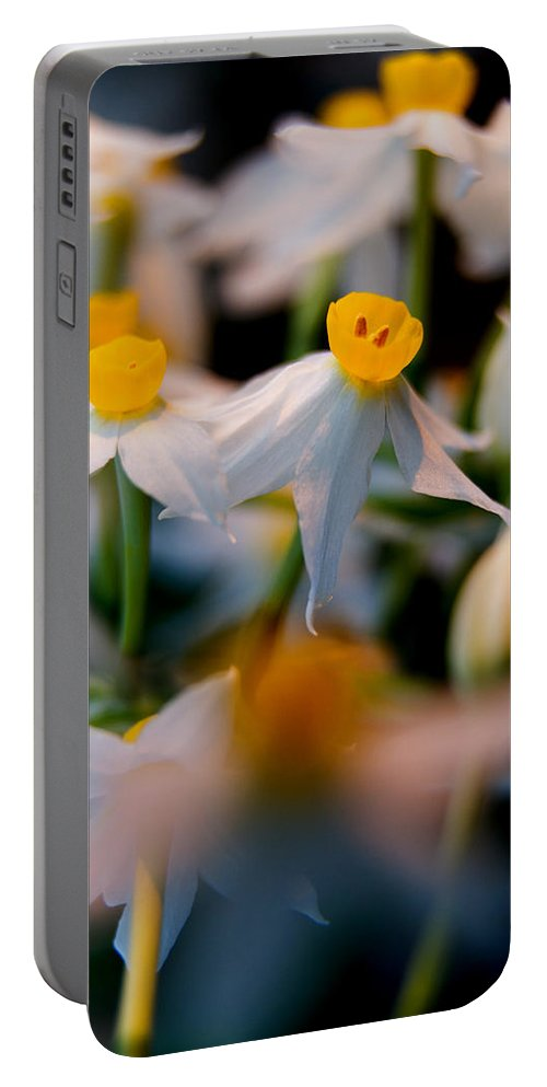 Angustifolius Portable Battery Charger featuring the photograph Narcissus Tazetta by Stelios Kleanthous