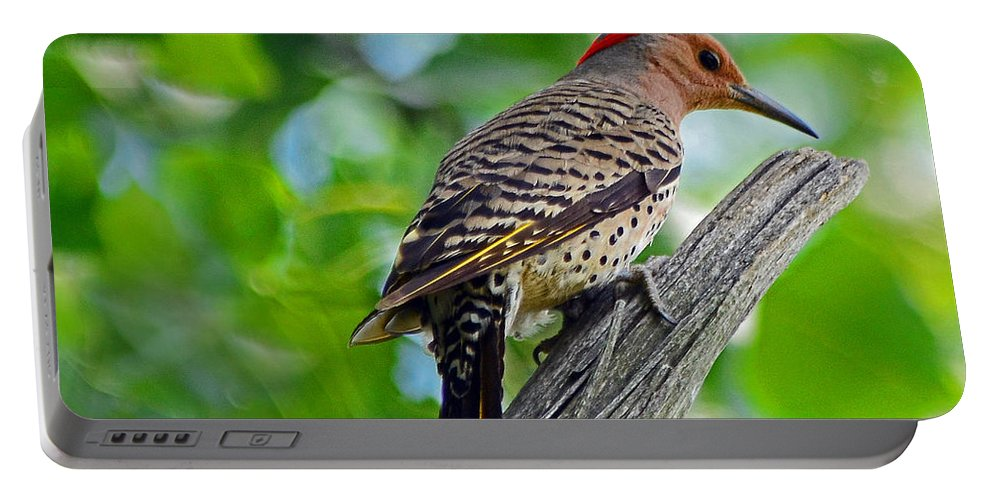 Bird Portable Battery Charger featuring the photograph Northern Flicker by Rodney Campbell