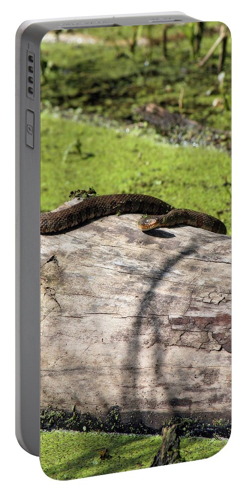 Northern Water Snake Portable Battery Charger featuring the photograph Northern Water Snake by CE Haynes