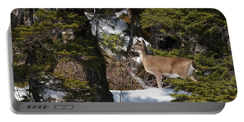 Deer Portable Battery Charger featuring the photograph Openings by Ted Raynor