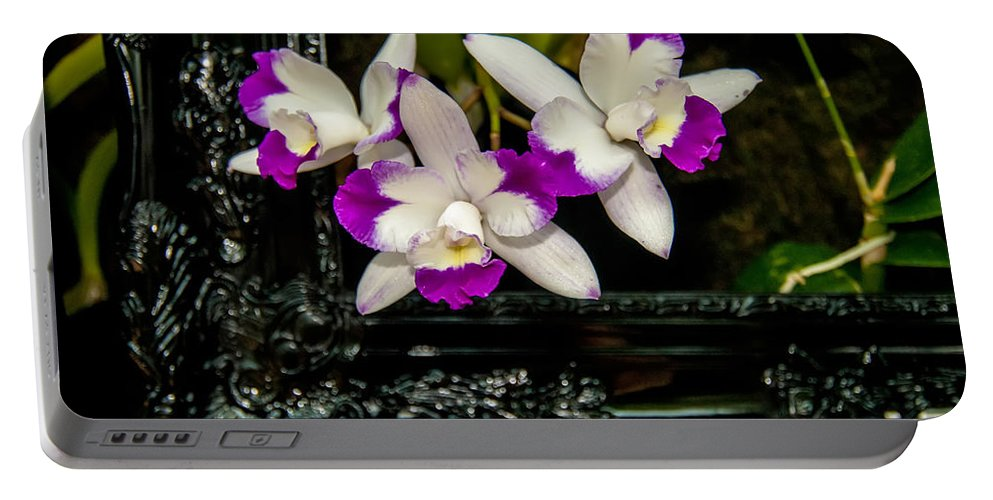 View Portable Battery Charger featuring the photograph Orchid Flowers Growing Through Old Wooden Picture Frame by Alex Grichenko