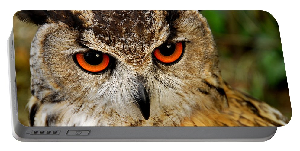Adorable Portable Battery Charger featuring the photograph Owl by TouTouke A Y