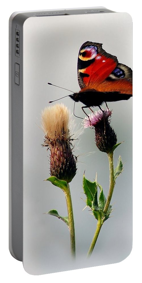Inachis Io Portable Battery Charger featuring the photograph Peacock Butterfly by Gavin Macrae