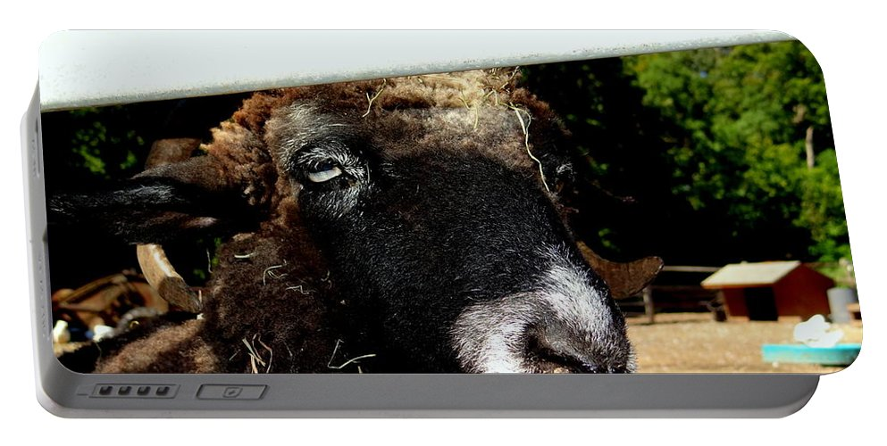 Fence Portable Battery Charger featuring the photograph Peek A Boo by Ed Weidman