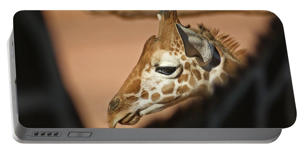 Animals Portable Battery Charger featuring the photograph Peek A Boo by Ernie Echols