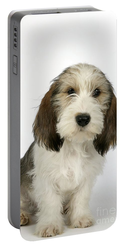 Dog Portable Battery Charger featuring the photograph Petit Basset Griffon Vendeen by John Daniels
