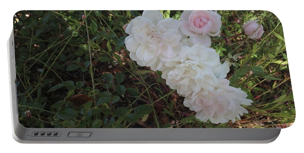 Pink Roses Portable Battery Charger featuring the photograph Pink by Joseph Yarbrough