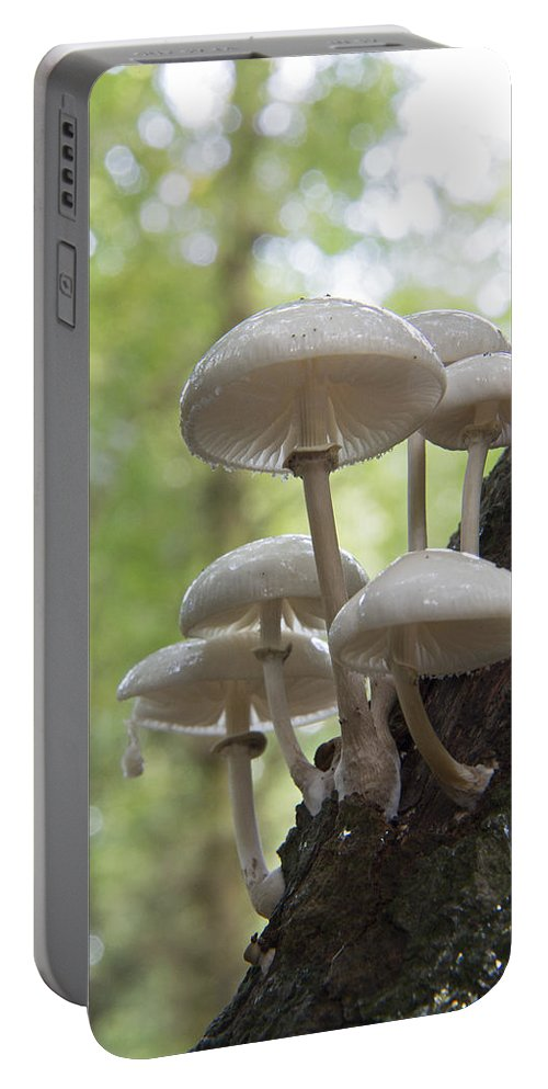 Toadstool.mushroom Portable Battery Charger featuring the photograph Porcelain Fungus by Bob Kemp