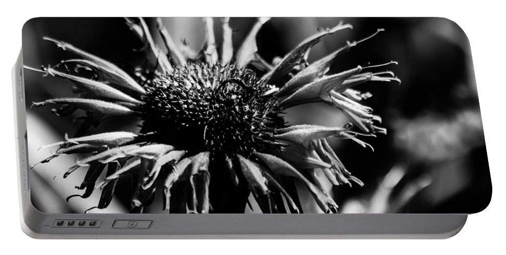 Flower Portable Battery Charger featuring the photograph Pretty In Pink by Lauri Novak