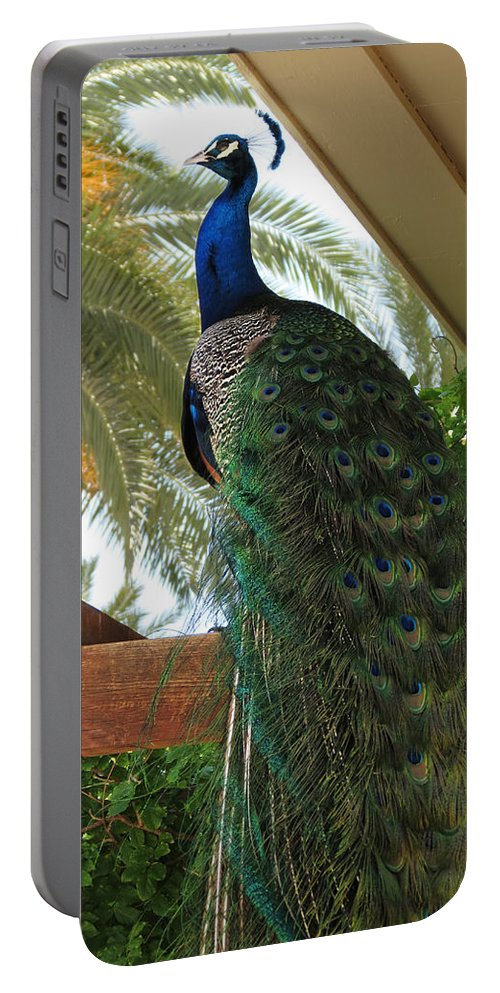 Peacock Portable Battery Charger featuring the photograph Proud Peacock by Laurel Powell