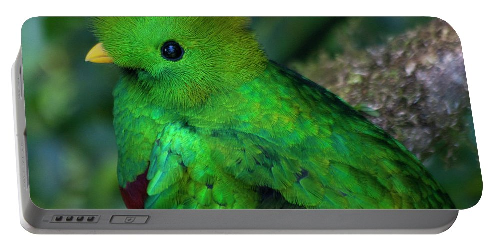 Bird Portable Battery Charger featuring the photograph Quetzal by Heiko Koehrer-Wagner