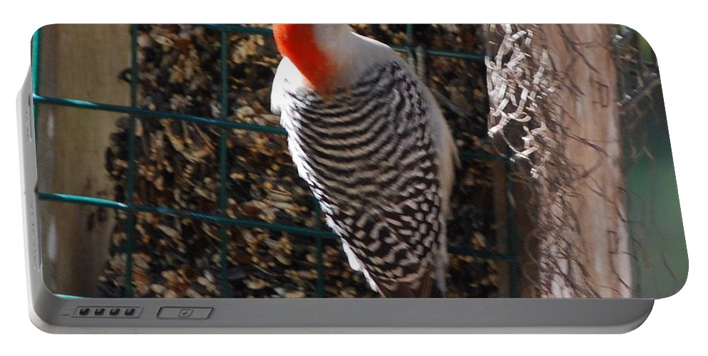 Feeding On Bird Seed Cake. Portable Battery Charger featuring the photograph Red Bellied Woodpecker by Robert Floyd