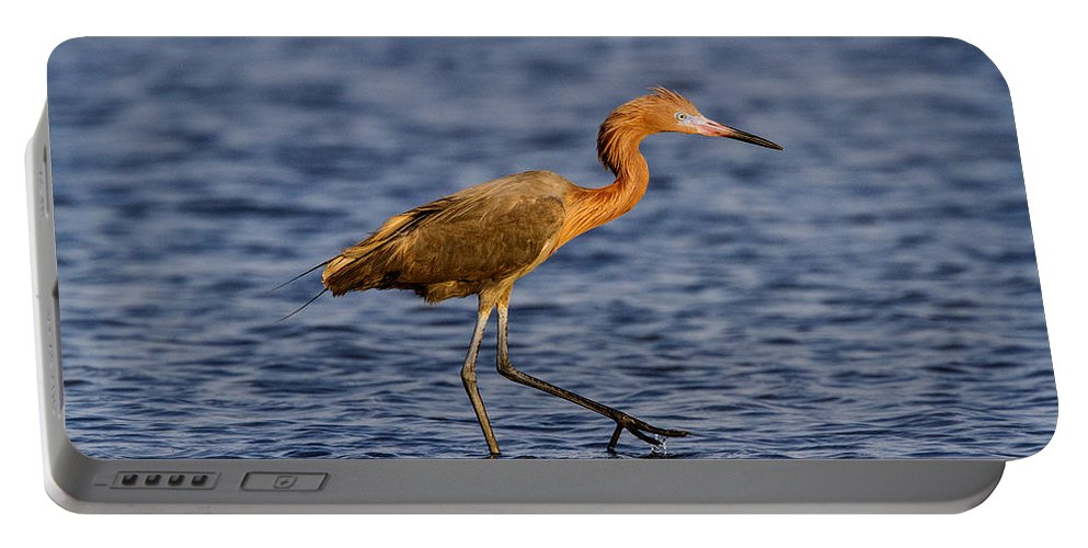 Doug Lloyd Portable Battery Charger featuring the photograph Redish Egret by Doug Lloyd
