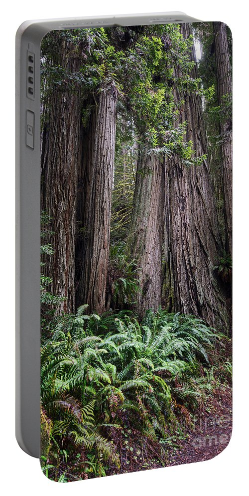 Redwood National Park Portable Battery Charger featuring the photograph Redwood by Yefim Bam