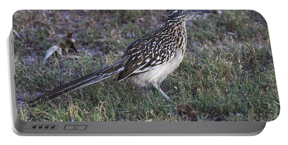 Doug Lloyd Portable Battery Charger featuring the photograph Roadrunner by Doug Lloyd
