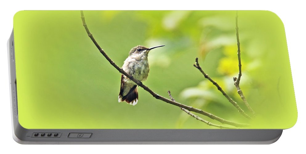 ruby-throated Hummingbird Portable Battery Charger featuring the photograph Ruby-throated Hummingbird - Immature Female - Archilochus Colubris by Mother Nature